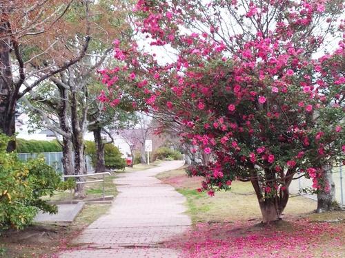 ある日の散歩道.jpg