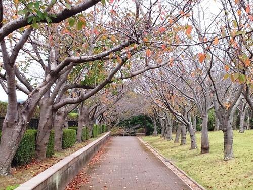 散歩道の秋.jpg